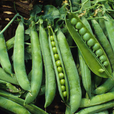 peas-g12